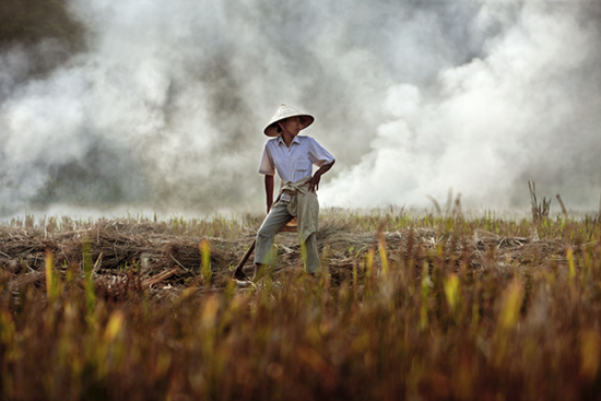 Vietnam Ethnic Minorities: Farmer in rice field, 2010 © Jack Dabaghian