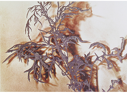 Todd Walker, Ragweed, 1981, lithograph, 10.5 x 7.5 inches