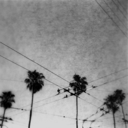 Palm © Chris Cranford, first place