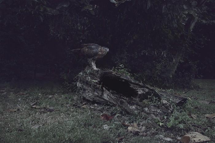 eagle.212831