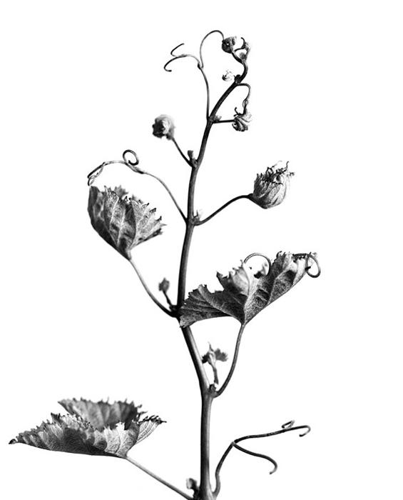 "from ""Planta Sapiens"""
