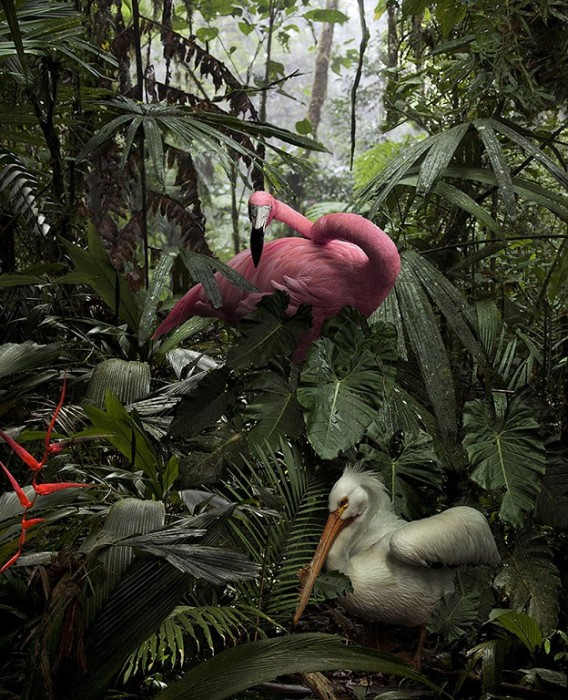 A Lost Flamingo and A Lost Pelican © Pat Swain