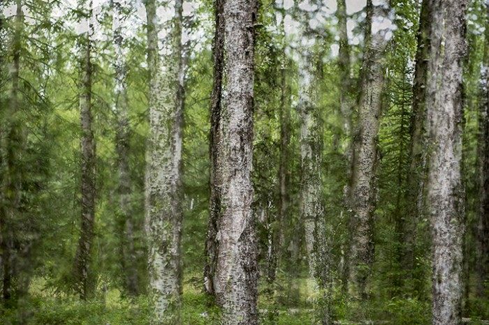 Dan Shepherd, Alaska Trees #8, 2013, Archival Pigment Print on Hahnemuhle fine art parchment paper with a hand torn deckle edge, 24 x 36 inches