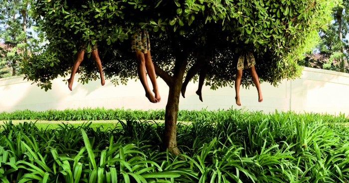 Ellen Kooi_Lissabon-tree_camara oscura