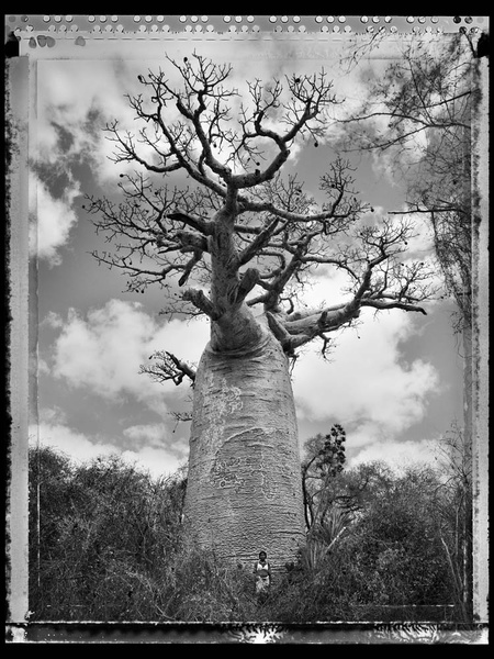 photo-eye bookstore_Ling_Tree of Generations_Ling_Ling_#30
