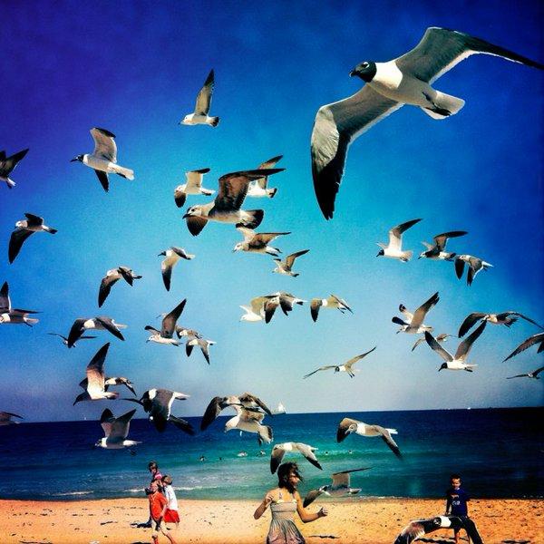 Birds 2